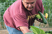 Navajo man picking vegetables in garden